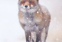 Naturaleza Animal  / WILD LIFE LOVELY CUTE