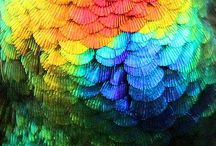 Those Colors