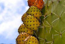 Cactus beauty