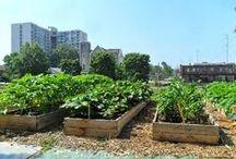Rooftop Farm / Dakakkers op daken van huizen en kantoren