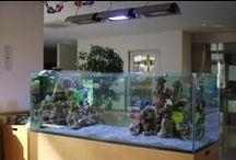 介護施設の水槽 / 介護施設の水槽 http://www.art-aquarium.jp/