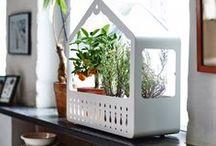 Greenhouses / Plantenkassen voor het balkon en de tuin. #greenhouse #plantenkas #kas #kweekkas