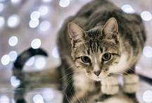 CAT / 고양이 사진