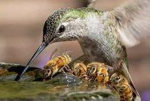    birds & flutter-bys    / for their delight & mine