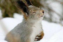    critters - cuteness overload   