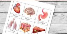 Education: Science- Anatomy / Resources for teaching anatomy to K-12