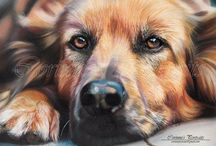 CoLd NoSe.....WaRm HeArT / ART - All Breeds Of DoGGies. . . . No Pin Limits...Pin as many as you like / by Susan Whalley