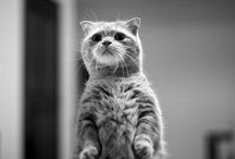 ♆ Feline / by Ămy 🎃