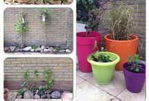 """Mijn tuin / De """"gebruiksaanwijzing"""" van de planten in mijn tuin"""
