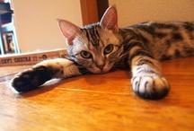 我が家の猫達 / My cats / ラテ、ラナ、ラムネ、我が家の猫達