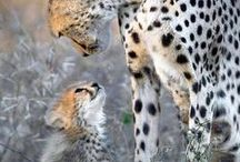 Animals-Wild, and Domestic / I love animals of all kinds-I'm Really against animal cruelty!