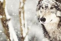 To Live With Wolves/ She-wolf boho / I want to be able to live with wolves, to be wild and free like They are!
