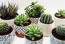 Succulents and Cacti / My favorite kind of plants for home :-)