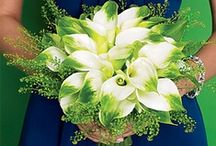 Green Calla Lily Weddings / Green Calla Lilies are a variety of aethopica named Green Goddess