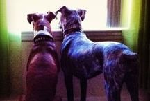 Dog Home Security Systems / Need an additional home security system? These furry friends can always lend a helpful hand.