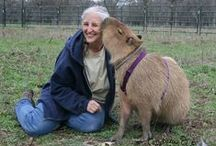 Old People with Pet Capybaras / and some wombats