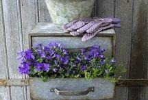 Bylinky, květiny