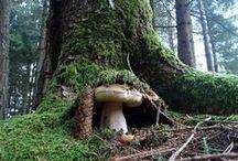 Il mondo magico del bosco e dei funghi