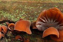 Altri funghi silvestri / Nei boschi nascono funghi dalle forme diverse e incredibili...