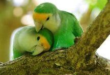 De liefde voor elkaar / Dierenknuffels