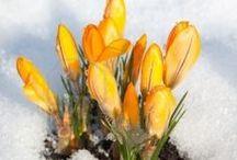 Wonderful WINTER / by Heleen Nijland