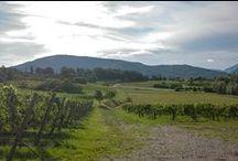 Wine landscapes