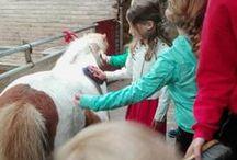 Zorgen voor dieren / Jeelo-project Zorgen voor dieren