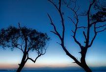 stromy / by Jana Mazancová