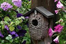 ptačí budky, krmítka