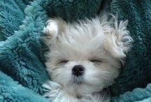Dog ideas & fun photos