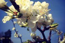 Vår trädgård / Här visar jag bilder från vår trädgård, som började anläggas våren 2006.