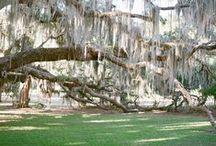Savannah, GA / Savannah, GA, Travel, History, Art, College, Culture, Historical, City