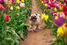Pug Love / by Sara Hargis