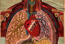 Otra medicina / by Anayantzin Contreras