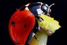 Cool Bugs  & Friends