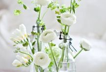 Flowers / My favourite flowers, mainly white!