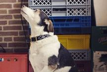 Marie / De leukste televisiehond van Nederland heeft natuurlijk haar eigen prikbord!