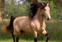 Horses / by Marjorie McCormick