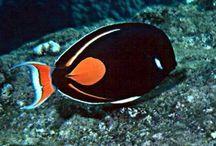 Fishies / by Jordan Ertz