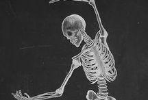 Anatomy, body, skeleton, kresby