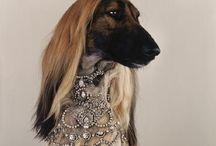 Chic : handbags, cars, dogs.,,,!!!!