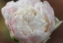 Blommor och gröna växter / Blommor som jag har el vill ha i trädgården