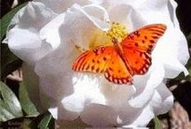 ✨ Magical Metamorphosis! ✨ / Love is like a butterfly  / by Jane Martin