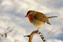 Vögel im Garten | Liga Vogelschutz / Unsere Gärten und Parks sind wertvolle Lebensräume für viele verschiedene Vogelarten. Kohlmeise, Amsel und Rotkelchen kennen viele. Aber es gibt noch so viel mehr zu entdecken. LigaVogelschutz engagiert sich für lebendige Parks und Naturgärten. Sei dabei.