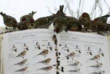 Birdwatching | LigaVogelschutz / Die schönsten Vogelbeobachtungsgebiete Deutschlands und Europas. Interessante Tipps, tolle Locations. Birdwatching - die schönste Art, Natur und Landschaft zu erleben! LigaVogelschutz engagiert sich für den Schutz der Vogelwelt. Sei dabei.