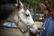 Equestrian Therapy & Healing / Please connect as we rescue & care for over 100 horses on Texas & French Ranches, with Equestrian Therapy for Special Needs Children. On Twitter (friendsoflyne), LinkedIn.com/In/FriendsOfLyneHorseRescue, Facebook.com/FriendsOfLyneHorseRescue & for the Arts: Facebook.com/EnlightenedArtSociety