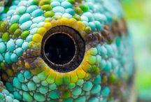 Reptiles & Such / reptiles