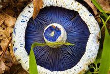 Nature is Amazing / Fungi, mushrooms