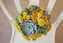 Flowers & Floral Arrangements / Flower arrangements, flowers, blooms, bouquets