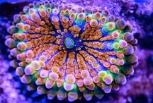 Vibrant Ecology / Nature / Wildlife / Vibrant Ecology / Nature / Wildlife photos by other people